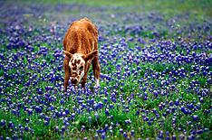 Texas Trail Ride