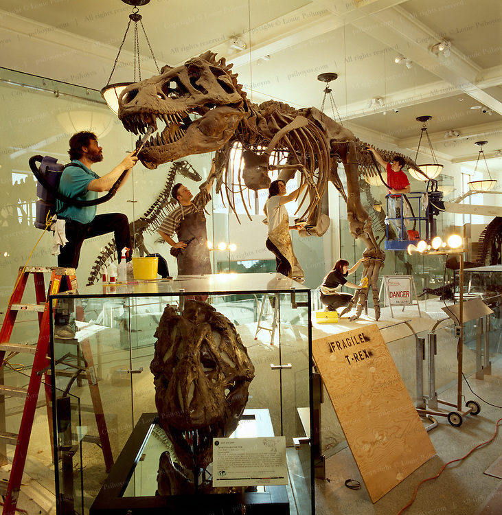 T. Rex was one of the largest-ever meat eating land animals.  The bi-pedal giant grew to some 40 ft (12 meters) weighed up to 7 US tons (6.5 metric tons) and small two-fingered hands that were actually surprisingly strong.