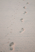 Foot and paw prints in sand
