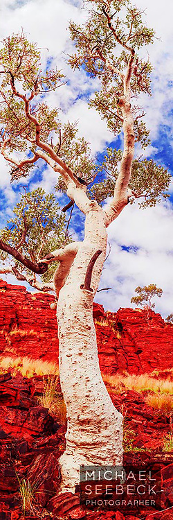 A vertical panoramic photograph of a beautiful eucalyptus against a rugged escarpment of the Pilbara.<br /> <br /> Limited Edition of 125 Prints