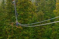 Zipline, Alaska Canopy Tours, near Ketchikan, Southeast Alaska USA