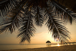 Palm tree, beach and Caribbean Sea at sunrise, Jaguar Reef Lodge, Hopkins, Stann Creek District, Belize, Central America   PR