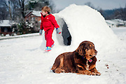 A dog stands guard outside an igloo as a boy stands at the entrance.