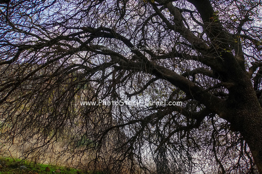 bare branches of a deciduous tree
