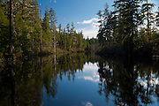 a pond in a coniferous forest on the rural Kitsap Peninsula in Puget Sound. Washington, USA