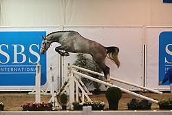 338, Heraldik Sitte<br /> SBS Keuring 2016 Gesves<br /> © Hippo Foto - Counet Julien