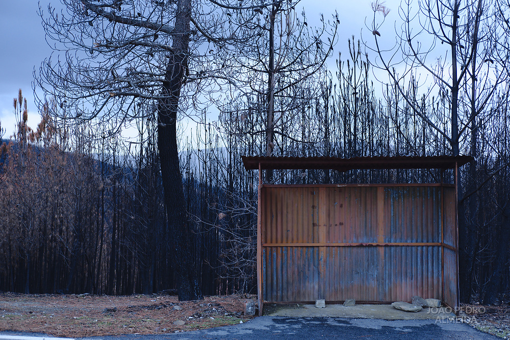 A Bus Stop in a quiet section of a road, also caught by the flames.
