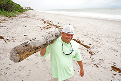 October 7, 2016 - Florida, U.S. - Billy Brescia, of Jupiter, carries a piece of driftwood off the beach in Jupiter south of Carlin Park Friday. Brescia said it would make a nice addition to his backyard bar. (Credit Image: © Richard Graulich/The Palm Beach Post via ZUMA Wire)