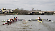 23 March 2019. Boat Race Fixture.  OUWBC vs Molesey BC.<br /> <br /> As preparation for the The Boat Races, Oxford and Cambridge clubs participate in a number of Fixtures against other clubs, rowing the same Tideway course as used for the Boat Race.<br /> <br /> OUWBC Crew List (Yellow hulled boat):-<br /> Stroke: Amelia Standing, 7. Tina Christmann, 6. Beth Bridgman, 5. Liv Pryer, 4. Lizzie Polgreen, 3. Renée Koolschijn, 2. Anna Murgatroyd, Bow. Issy Dodds, Cox. Eleanor Shearer,