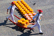 Porters carrying wheels / rounds of Gouda cheese by stretcher in Waagplein Square, at Alkmaar cheese market, The Netherlands