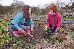 Two women weeding on an allotment.