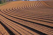 A07XXD Pattern formed by ploughing sandy soil Suffolk Sandlings England