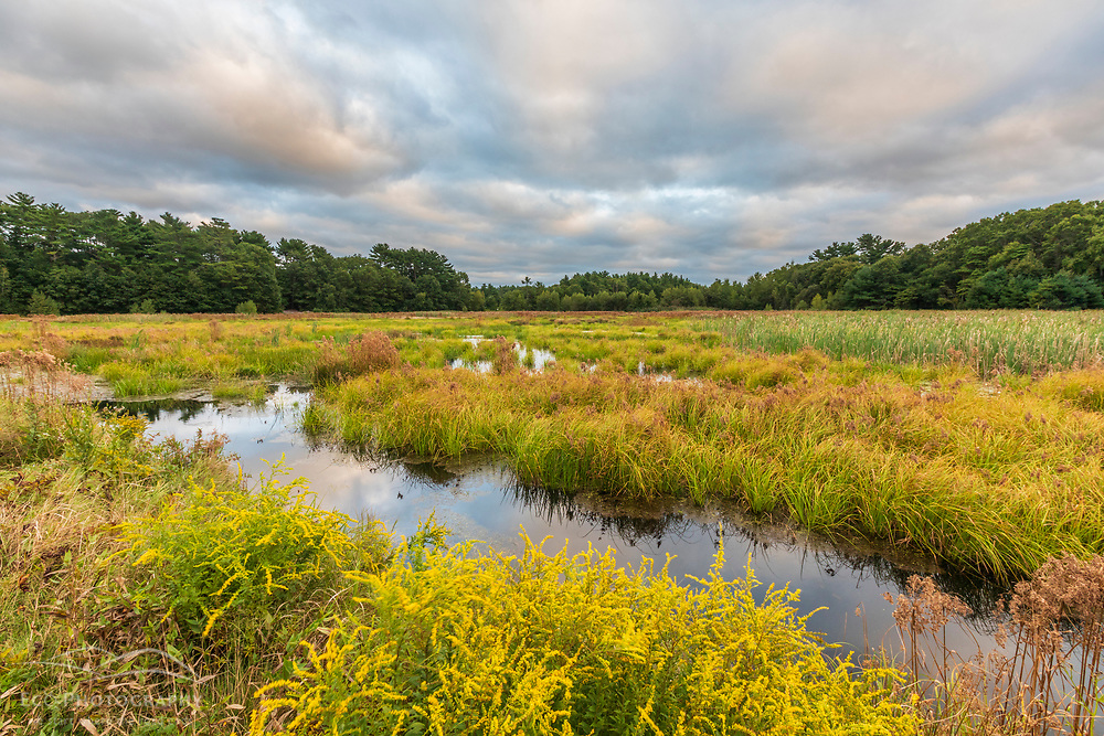 Wetlands at the Crowell Conservation Area in Duxbury, Massachusetts.
