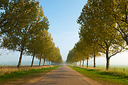 Lady Anne's Drive, a beautiful tree-lined avenue, runs from North Norfolk's coast road to Holkham Beach. East Anglia.