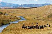 Mongolie, Asie Centrale, Region d'Arkhangai, troupeau de yak et cavalier au bord de la riviere // Mongolia, Central Asia, Arkhangai Province, yaks and cavalier beside the river