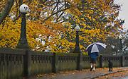 A man walks his dog along Queen Anne Blvd. in Seattle in the rain. (Ellen M. Banner / The Seattle Times)