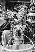 Beggar at Battambang Market