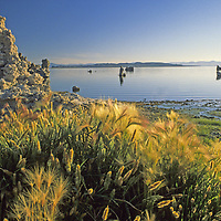 MONO LAKE, CALIFORNIA. Sunrise over south shoreline tufa towers, photographed in 1988, when lake was near its lowest ebb due to Los Angeles water diversions. After a court ruling, diversions were reduced and these towers are now submerged again.