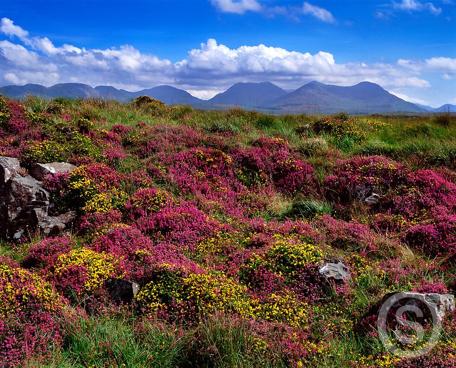Photographer: Chris Hill, Derrigimlagh Bog, Connemara, County Galway