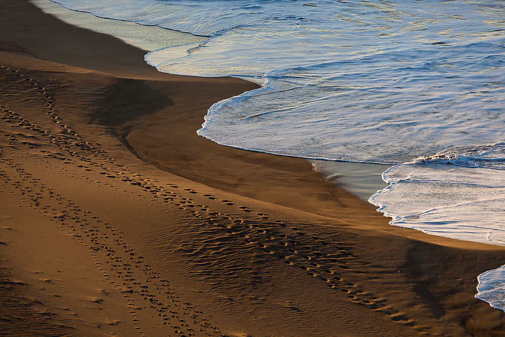 Detail of Limantour Beach at sunrise, looking from the cliffs above.