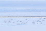 A narrow strip of the Lamar River is visible between the ice and snow that covers the Lamar Valley in winter in Yellowstone National Park, Wyoming.