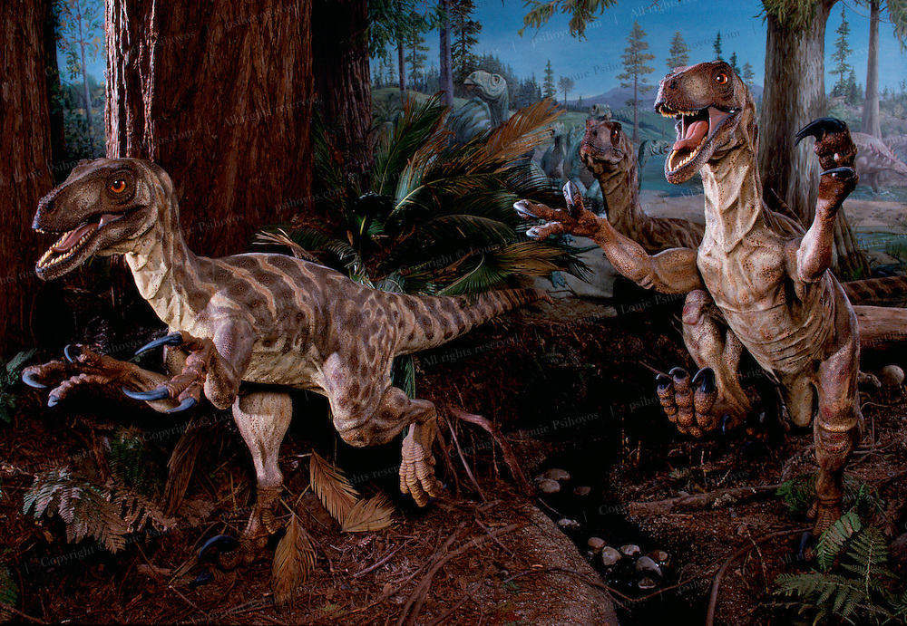 """Deinonychus sculptures in a diorama by Stephen Czerkas in the California Academy of Sciences.  The 8 -11 foot (2.5-3.5 meter) long dinosaurs were named after their bladelike claws.  Deinonychus means """"terrible claws."""""""