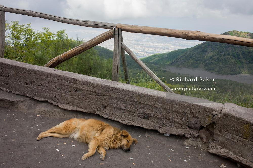 Sleeping dog on lava dust ground on the slopes of Vesuvius.