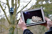 Nederland, Groesbeek, 6-3-2015Een uilennest is op de computer of ipad te zien door een webcam die in de nestkast is geplaatst.FOTO: FLIP FRANSSEN/ HOLLANDSE HOOGTE
