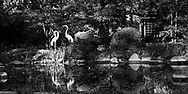 Dappled sundlight highlights the heron figures along the bank in Fabyan Forest Preserve's Japanese Garden. The garden is meant for quiet, introspective reflection.