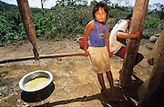 MACUXI INDIGENOUS PEOPLE, Amazon, near Boavista, northern Brazil, South America. Macuxi indians involved in long hard process extracting flour from yam root. Traditional carbohydrate staple food for tortillas and other foods. Ecological biosphere and fragile ecosystem where flora and fauna, and native lifestyles are threatened by progress and development. The rainforest is home to many plants and animals who are endangered or facing extinction. This region is home to indigenous primitive and tribal peoples including the Yanomami and Macuxi.