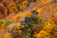 Ancient beech forest reserve in Balkan Mountains