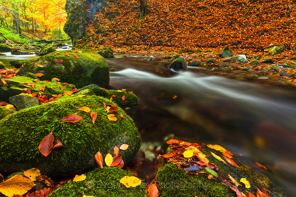 River rapids in an colorful autumn forest