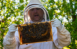 North Berwick, Scotland, UK. 26 April 2020. Beekeeper Craig Stebbing from North Berwick makes his regular check of his beehives. He is also installing temporary feeders which provide a sugar based solution for the bees to feed on. Iain Masterton/ Alamy Live News.