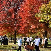 20141115 Fall Service Day tif