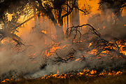 HEALDSBURG, CA - OCTOBER 26: A back fire set by firefighters burns along a hillside during firefighting operations to battle the Kincade Fire in Healdsburg, California on October 26, 2019.
