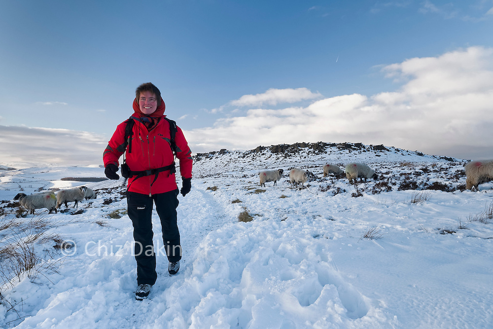 The path to the road from near the trig point on Stanage Edge gets obscured by fresh snow in winter - sheep tend to tread down a path just as much as walkers!