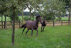Roxanne met veulen van Saros<br /> Stal Gestelhof - Meerhout 2005<br /> Photo © Hippo Foto