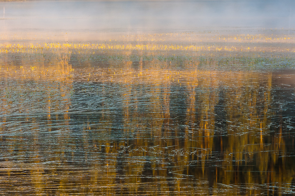 Forest reflection, Reflection Lake, morning fog, August, Mount Rainier National Park, Washington, USA