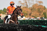 27 March 2010 : William Dowling and AMBERSHAM take a look at one of the hurdles before the Woodward Kirkover hurdle race at the Carolina Cup.