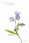 High-key Flowers