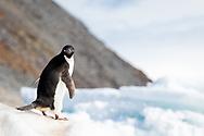 Paulet Island, Antarctica
