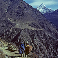 NEPAL, HIMALAYA. Trekkers & Sherpa guide en route to Everest base camp, Khumbu region. Mt. Ama Dablam & Phortse village bkg.