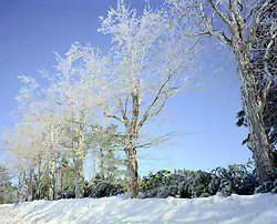 Ice storm, West Lake Rd., Dublin, New Hampshire.