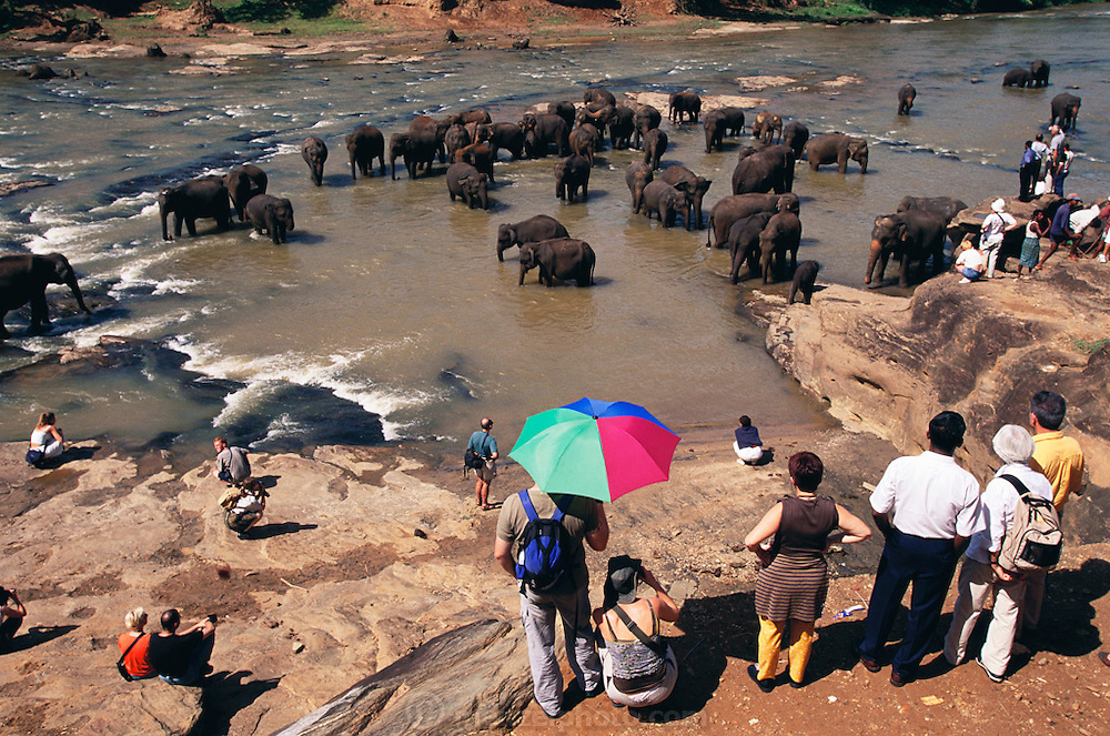 Elephant orphanage at Pinnawella, Sri Lanka. This was one of Sir Arthur C. Clarke's favorite places to visit in Sri Lanka. Sir Arthur is best known for the book 2001: A Space Odyssey.