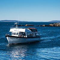 Monhegan Island ferry boat approaches the dock.  Operated by Hardy Boat Cruises