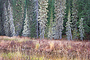 Where the field meets the forest, Idaho