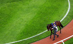 The Tourard Man in the parade ring before the Pertemps Network Handicap Hurdle Race during day two of the Showcase at Cheltenham Racecourse