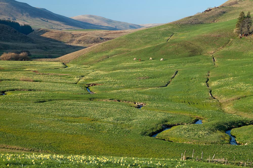 Elevated veiw ofmeandering stream passing through grassland.