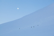 Anouk Vlug (l-r), Michelle Blade, Nate Stevens, and Kiya Riverman makes turns on Hallwylfjellet, Svalbard at dusk.