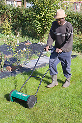 Older man mowing the lawn on his allotment,